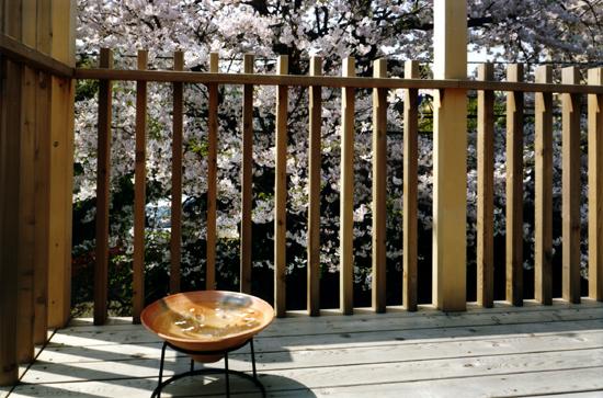 桜を見る家 桜を見る家について